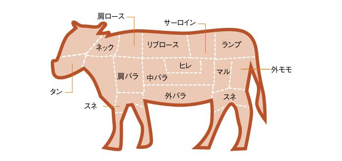 牛肉部位説明