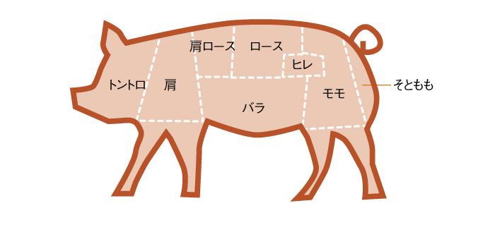 豚肉部位説明